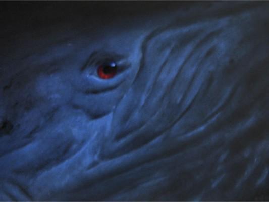 Wir Menschen sind mit den Walen verwand