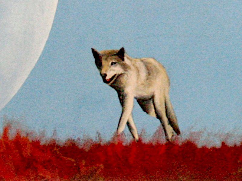 Detail Wolf und Regenbogen